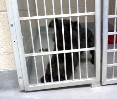 Imagine ME, behind bars!