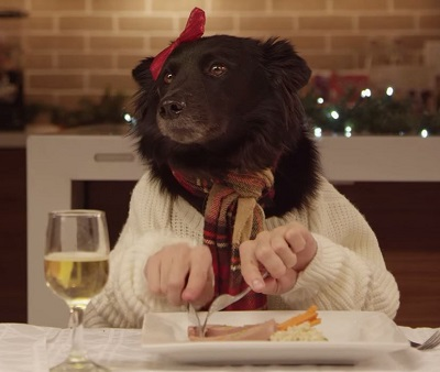 Watch 13 Shelter Dogs And A Cat Take Part In A Hilarious ... |Christmas Vacation Dog Dinner