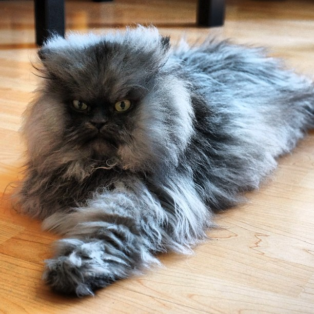 Colonel Meow via Facebook