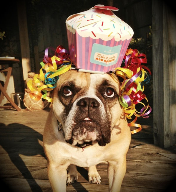 Birthday Dog Loves a Party!