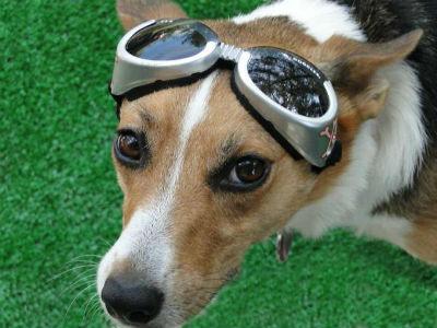 Τι αποτελούν τα μάτια για τον σκύλο;