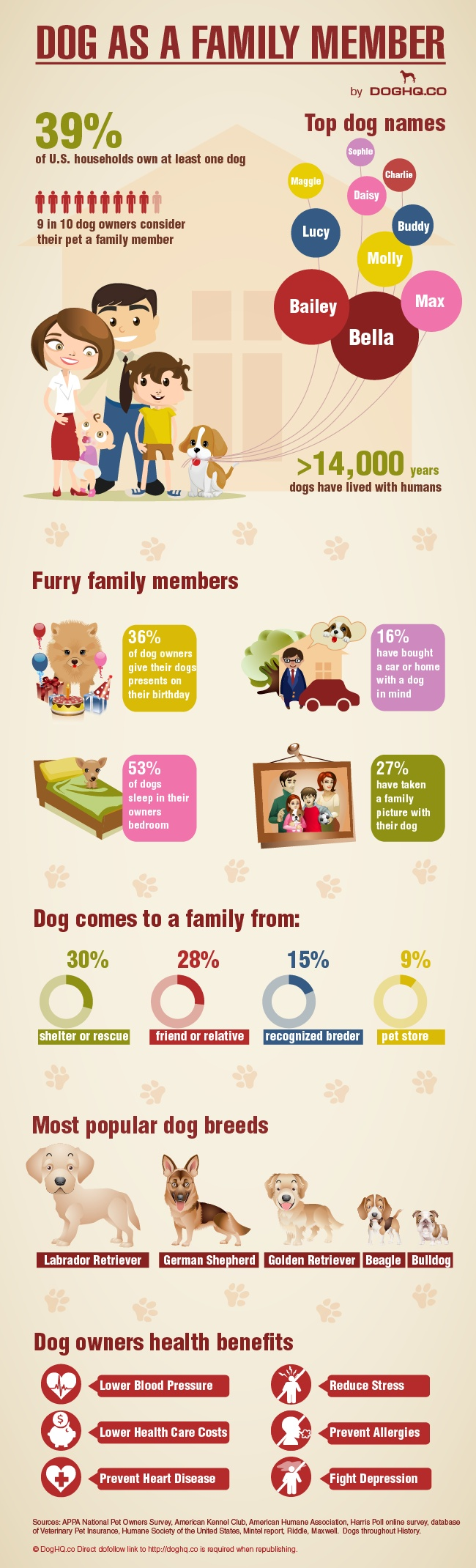 Dogs as Family Infographic