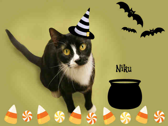 Niku is available for adoption!