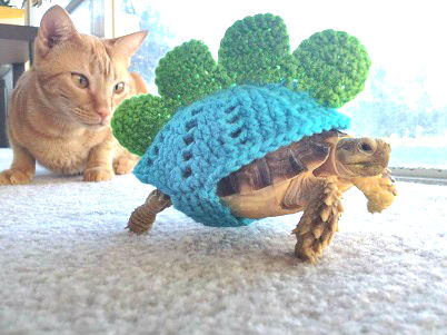 Sweater Tortoise