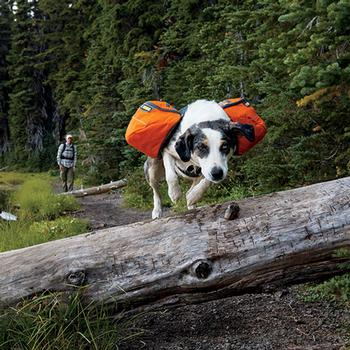 Approach Dog Pack by RuffWear
