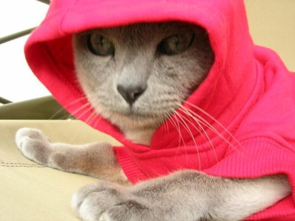 Even cats think hoodies are cool!