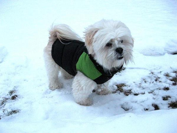 http://www.baxterboo.com/dog/supplies.cfm/padded-dog-vest-googreenblack