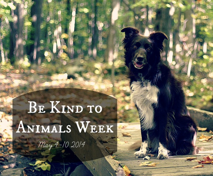 This week, let's teach children to be kind to animals