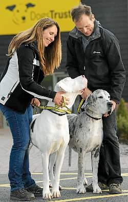 http://www.shropshirestar.com/news/2011/10/31/shrewsburys-blind-great-dane-and-guide-dog-rehomed/