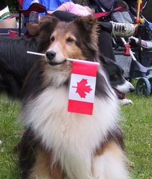 Canada Pride Dog