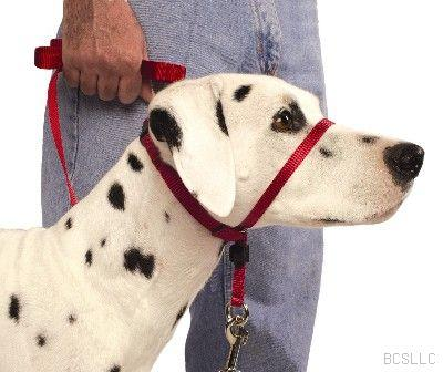 Dog Headcollar