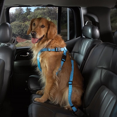 Cruising Companion Car Harness