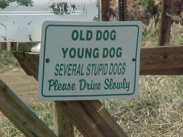 Stupid Dogs Dog Sign