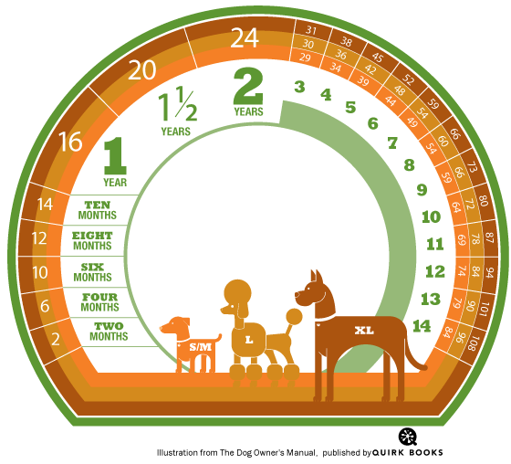 Dog age infographic