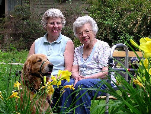 Therapy Dog for the Elderly