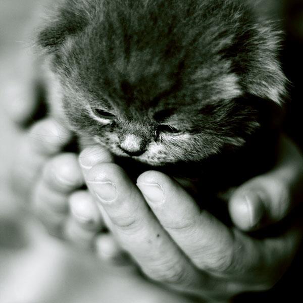 Cat in Hands