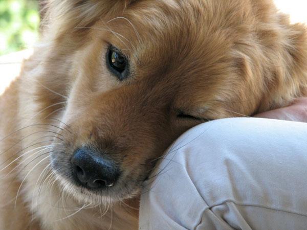 Leaning & Loving Dog