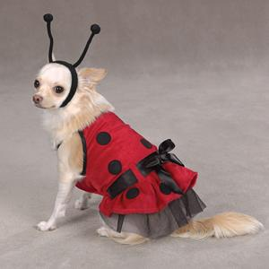 Lady Bug Dog Costume & BaxterBoou0027s Top 10 Halloween Dog Costumes | BaxterBoo