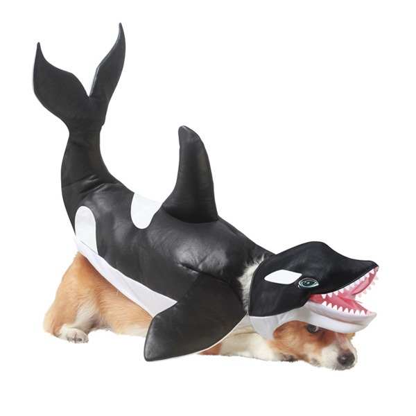 Orca costume