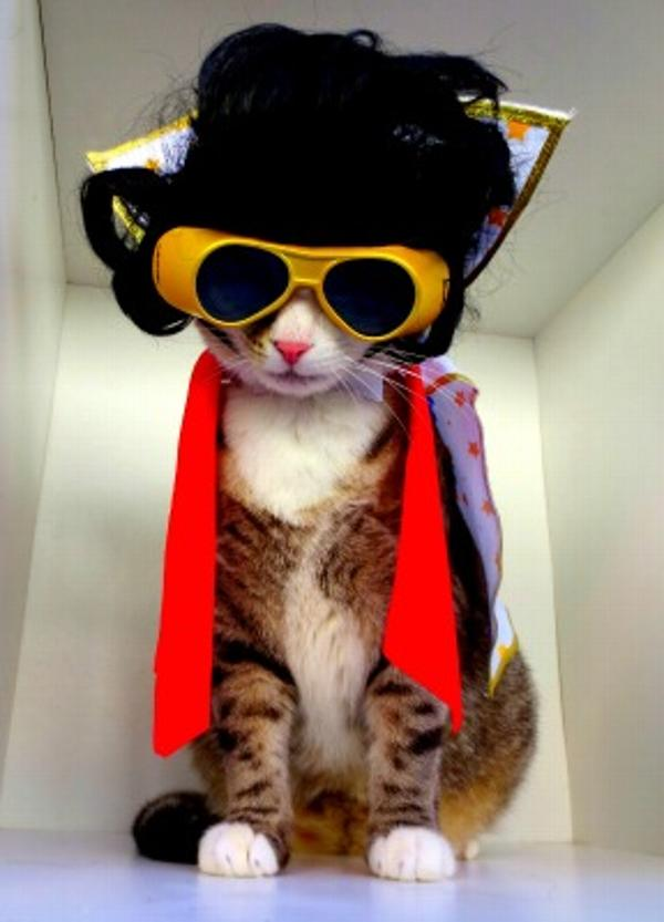 The King of Rock and Roll rocks as a cat!