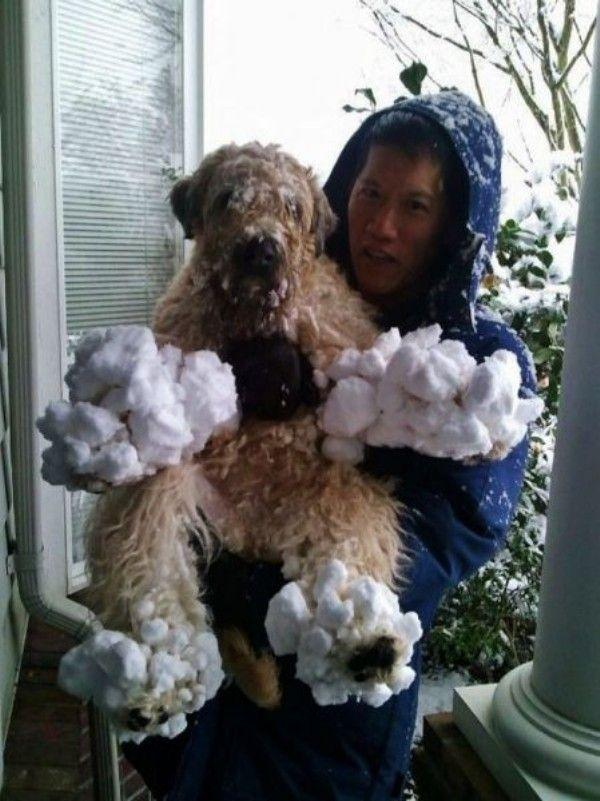 Balls of snow can be painful and no fun to thaw off for long-haired dogs.