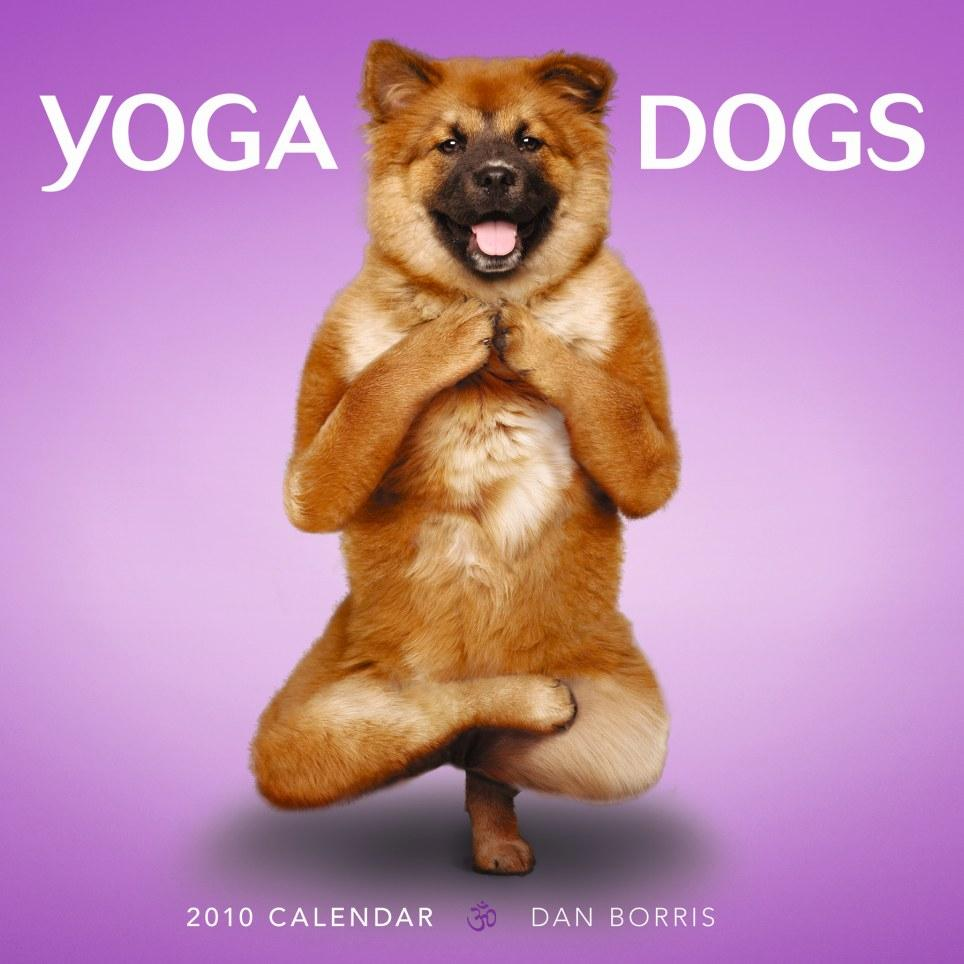 Cute Yoga Dogs Yoga dog calendar cover