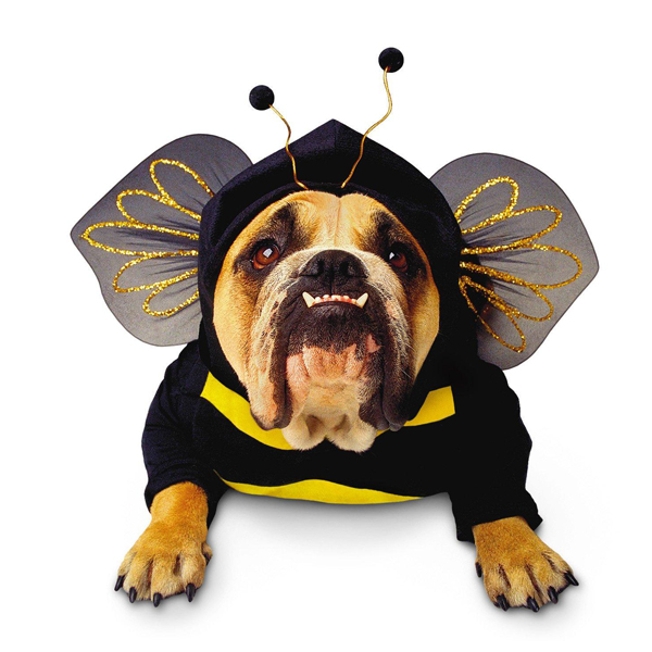Zelda Bumble Bee costume